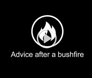 3. Advice after a bushfire