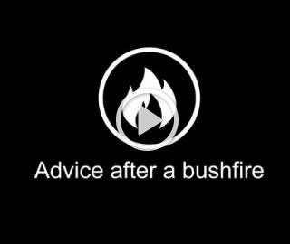3. Advice after a bushfire